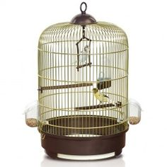 A budgie cage with removable tray and integrated hook to securely accommodate your feathered friend. Bird Cages, Budgies, Ceiling Lights, Lighting, Brown, Home Decor, Marquetry, Art, Parakeet
