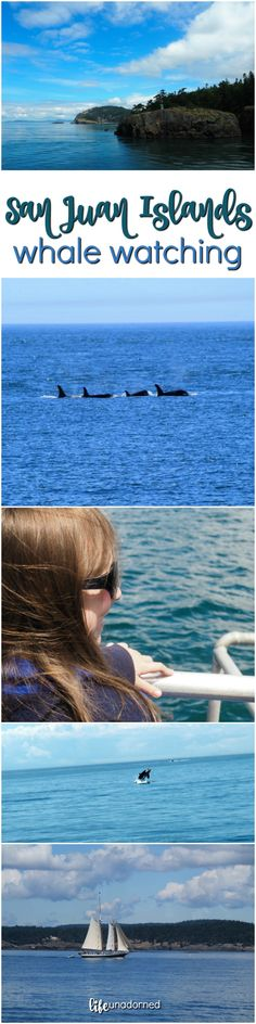 San Juan Islands Whale Watching family travel tips in the Pacific Northwest.