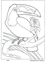 Two Toucans Coloring page paper piecing Pinterest Paper