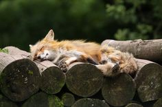 quiet unrest... snoozing in the wood pile:jj:))