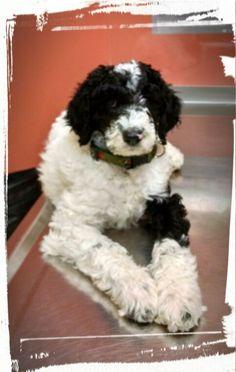 Joeys 1st vet.visit.