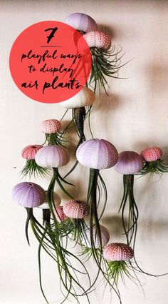 7 Playful Ways to Display Air Plants | eBay