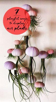 7 Playful Ways to Display Air Plants   eBay
