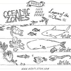The Hands-On Teacher: Ocean Zones Foldables and GREAT