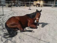 Hier fühlen sich die Pferde wohl...