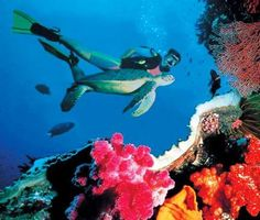 Scuba dive the Great Barrier Reef!