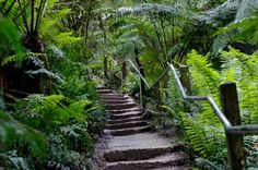 Embrace the outdoors this weekend and get your dose of Vitamin D on one of our top 5 nature walks in and around Melbourne. Sherbrooke Falls Trail Less than an hour's drive from the CBD is Sherbrooke F Vibe Hotel, 1000 Steps, Australian Native Garden, Outdoor Gym, Walking In Nature, Pathways, Places To Go, Explore, Ranges