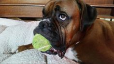 It's my ball & I don't want to share