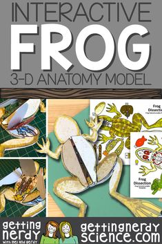 Life science and biology resources for class or homeschool. Engage students with interactive notebooks, paper dissection models, full lessons and more! Science Vocabulary, Science Fun, Science Biology, Teaching Science, Science Education, Life Science, Science Experiments, Veterinary Studies, Veterinary Medicine
