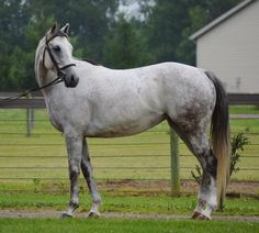 Nothinglefttolose--Barn Name:Lucy; Thoroughbred; 2010; Mare;15.1hh;  Adoption Fee:	$600; Marysville, OH. Lucy is a very kind mare and loves people if treated well.  She does best when worked daily. Needs advanced rider to bring her along slowly and confidently.  Lucy loves attention and is good for grooming with no vices.  Lucy is starting to show some nice movement to her gaits and might be a nice Dressage prospect. She has no known injuries, so she is should be suitable for any discipline.