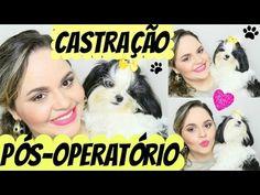 Pós-Operatório CASTRAÇÃO Cão + COMPARAÇÃO Fêmea e Macho Shih Tzu. | ...