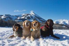 #CrestedButte #Ski Patrol Dogs Strike a Pose http://www.mountainhop.com/crested-butte-ski-patrol-dogs-strike-a-pose/