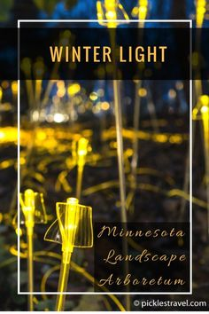 Bruce Munro's Winter Lights display is a Christmas photography wonderland for snow, vibrant colors and bokeh- click to get more details on how to get tickets and best times to go!