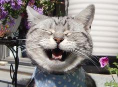 (≡^ꈊ^≡) #cat #neko #猫