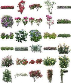 Flowers PSD of Furukawa: