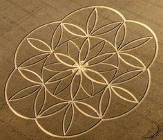 Crop Circle - Flower of Life pattern
