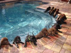 Puppy Pool Party.   Durbin Crossing.  New homes for sale in St. Johns, Florida
