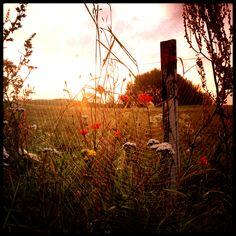Sunrise, spiderweb, near Burdąg