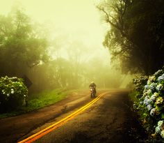 Estrada da Graciosa, Serra do Mar, Paraná, #Brazil. (Foto: Carlos C. B.)