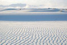 El extremo suelo del White Sands apenas consiente la vida de algunas plantas y animales, como la Yucca elata, el ratón de bolsas de las llanuras, la lagartija sorda menor o arañas lobo. Curiosamente, algunas de las especies endémicas de esta zona han llegado a experimentar cambios en su pigmentación para adaptarse al ecosistema