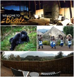 WE ARE OPEN - RWANDA - BISATE LODGE – our first ecotourism venture in Rwanda! Having already begun making a significant difference to the local community and to this fragile rainforest ecosystem, we invite you to become part of this purpose whilst experiencing the thrill of viewing the Critically Endangered mountain gorilla, amongst other endemic species. We invite you to travel with purpose & experience.... info@africamemoriestravel.com