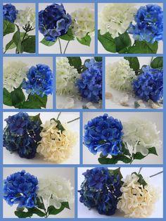 Hydrangea, Hortensia, blue, white....