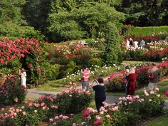 In downtown Portland is Washington Park, with 400 acres of trees, playgrounds, 15 miles of trails, glorious views of the city, and multiple gardens, including the International Rose Test Garden. Its 4.5 acres, comprised of 550 variations of roses (7,000 plants total!) helped Portland earn the name City of Roses.
