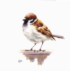 Sparrow originele aquarel vogel schilderij 7 4/5 x 7 4/5