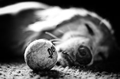 This reminds me of Reilly - he would wake up if you tried to take the ball.  I miss him!