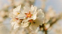 spring delight - null