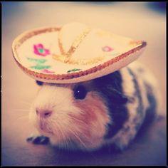 """""""Arriba arriba!"""" says Hosé the Hamster!"""