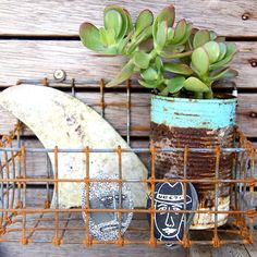 beachcomber: surf shack style, diggin the money tree plant and pop of turquoise.