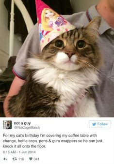 39 Tweets About Cats That Make Us Laugh Every Single Time - I Can Has Cheezburger? - Funny Cats | Funny Pictures | Funny Cat Memes | GIF | Cat GIFs | Dogs | Animal Captions | LOLcats | Have Fun | Funny Memes