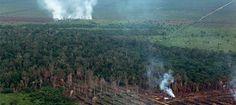 Éxito - Indonesia: elevadas multas a palmicultoras por quemar la selva - Salva la Selva