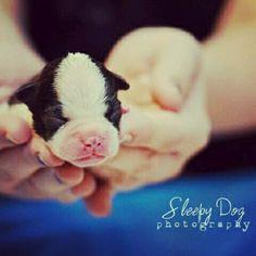 Sleepy Dog photography