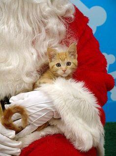 I've been a good little kitty, Santa!