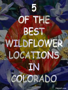 5 great mountain locations to see wildflowers in Colorado - 14erart.com