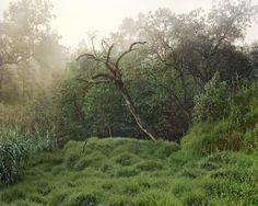 Janelle Lynch - Los Jardines de México