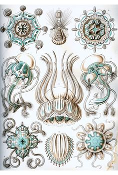 more ernst haeckel