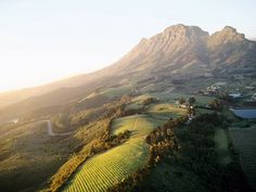 vineyards in Stellenbosch, South Africa