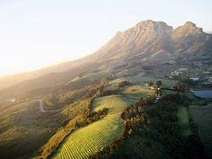 Serene Morning Vineyards of Stellenbosch, #SouthAfrica img via @NatGeo #wine STUNNING !!