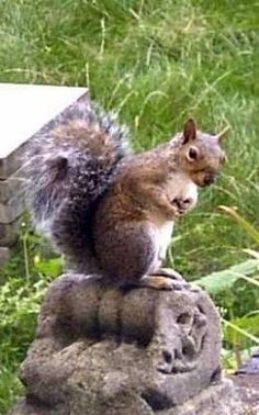 Why Squirrel Feeders Work ( keep them away from bird feeders, entertains you too) great article.