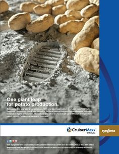 Cruiser Maxx D Potato - One giant leap for potato production