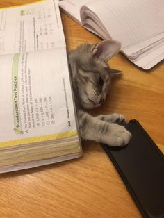 My cat when someone does homework. Cute Ferrets, Cute Cats, Funny Cats, Adorable Kittens, Animals And Pets, Baby Animals, Cute Animals, Crazy Cat Lady, Crazy Cats
