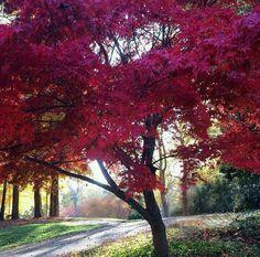 Autumn Rose, Autumn Forest, Tree Forest, Autumn Art, Autumn Leaves, Pink Trees, Gods Creation, Cool Landscapes, Hello Autumn