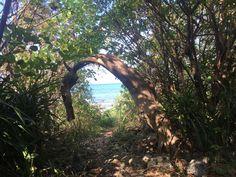 自然のアーチをくぐるとビーチに出られます🏖