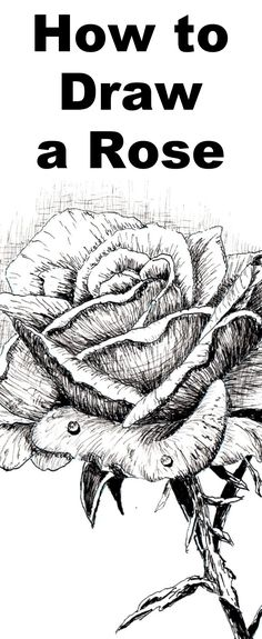 Learn to draw a rose with this pen and ink drawing lesson