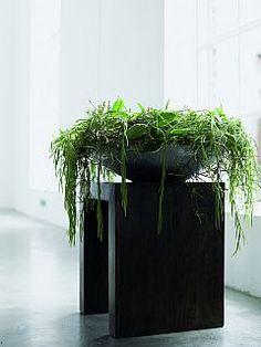 Tuincentrum Jaarsveld - In huis - Kamerplanten