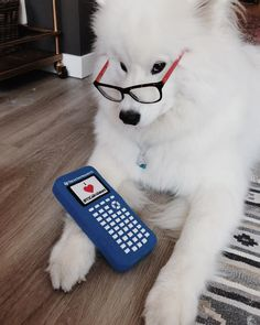 Funny samoyed dogs. Samoyed dogs full grown so cute. Samoyed pictures.