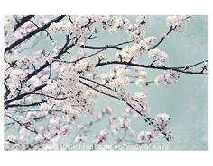 Blossom Aqua White Whimsical shabby Vintage 7x5 por ShabbyStudios